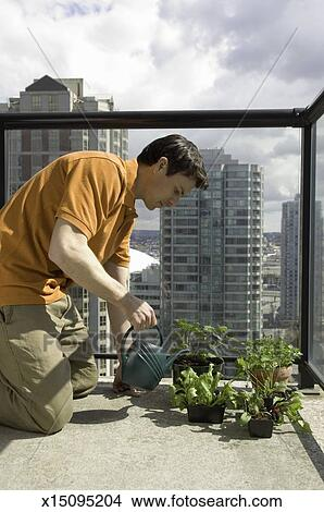 Man Watering To Plants At Balcony Picture X15095204 Fotosearch