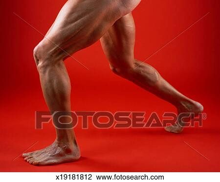Stock Photo of Man`s Muscular Legs x19181812 - Search Stock ...