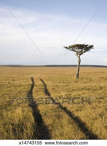 stock image of rutted road ending in distance on savannah x14743155