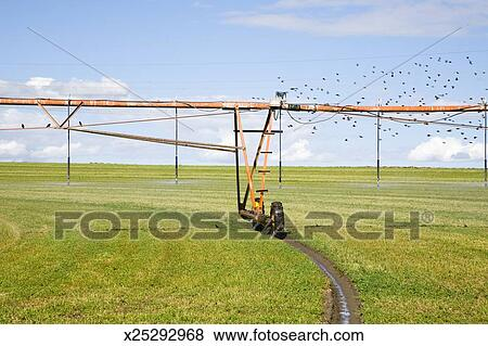 Automated center pivot irrigation system in farm field Stock Photo