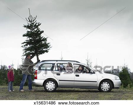 Car Christmas Tree.Family Loading Christmas Tree Onto Roof Of Car Stock Photograph