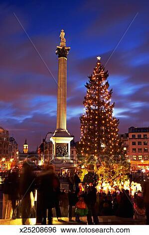 England Christmas Tree.England London Trafalger Square Nelson S Column And Christmas Tree Stock Photograph