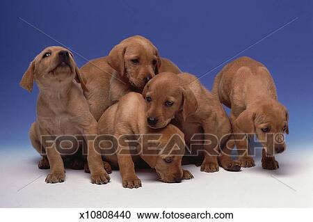 Stock Photography Of Group Of Puppies X10808440 Search Stock