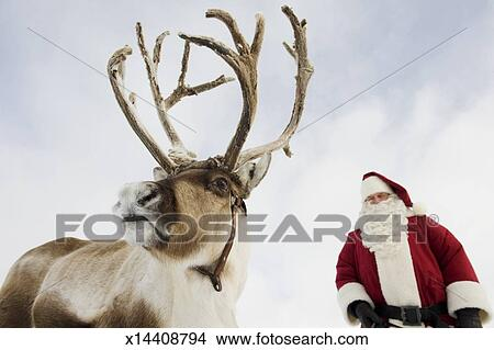 stock photo of santa claus standing with his reindeer x14408794