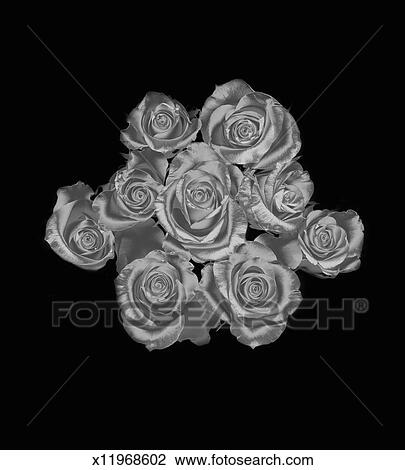 Silver Roses On A Black Background