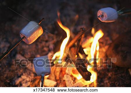 pictures of marshmallows roasting over bonfire x17347548 search
