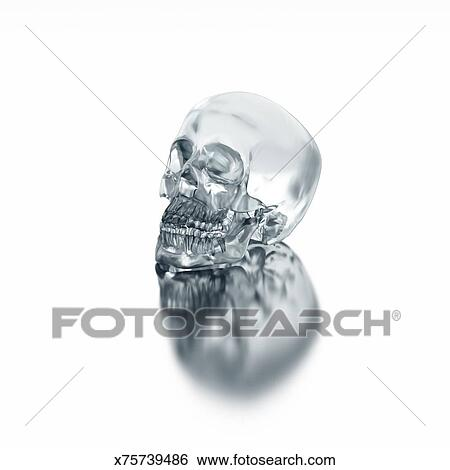 A Gl Skull Laying On Shiny White Surface