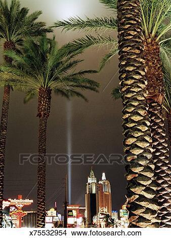 stock photo of usa nevada las vegas palm trees night x75532954