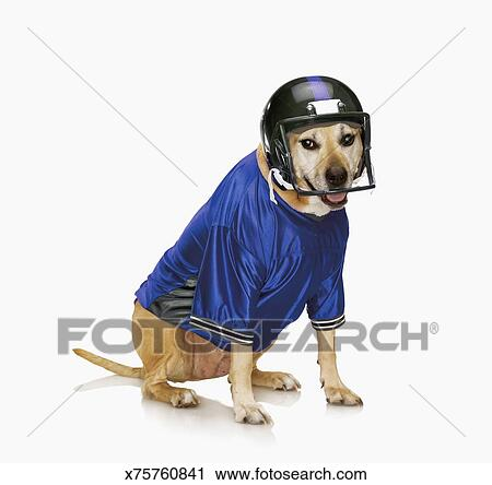 Dog wearing football helmet and jersey. x75760841 Foto search Stock Photos  ... abfce0939