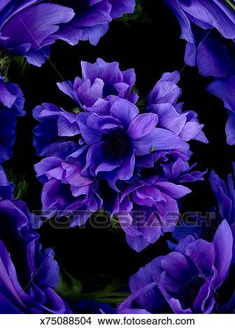 Fiori Viola Immagini.Fiori Viola Su Sfondo Nero Digital Composite Immagine