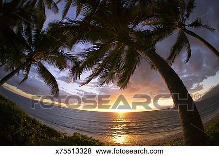 Pictures Of Fisheye Wide Shot Of Silhouetted Palm Trees Framing The