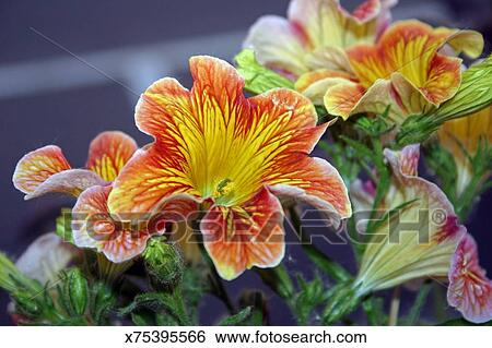 Stock Images Of Orange And Yellow Flower With Stained Glass Center