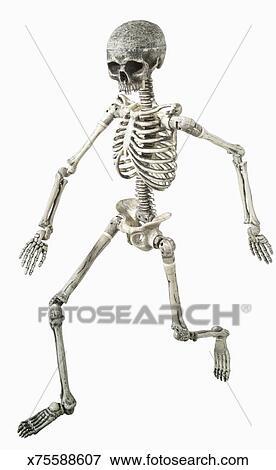 Foto - esqueleto humano x75588607 - Buscar fotos e imágenes y fotos ...
