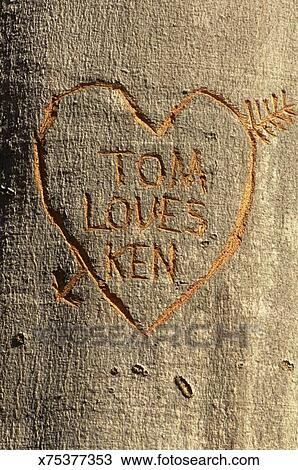 Stock Photo Of Heart And Names Carved Into Tree X75377353 Search