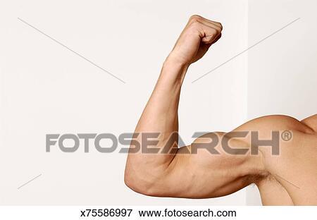 Foto - hombre flexionar, muscular, brazo x75586997 - Buscar fotos e ...