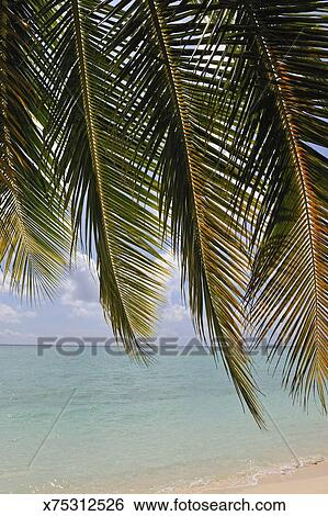 Stock Image Tropical Beach Seen Through Palm Fronds Fotosearch Search Photography