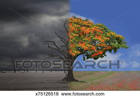 Pictures Of Half Deadhalf Alive Tree In A Desertmeadow Lands