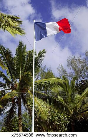 pictures of french flag under the coconut trees x75574588 search