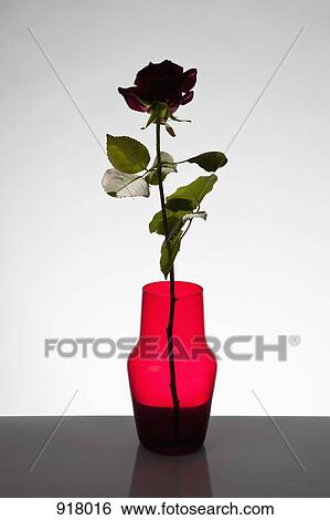 Stock Images Of A Single Rose In A Vase 918016 Search Stock