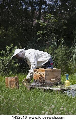 apiculteur 16