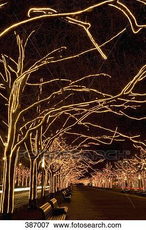 picture trees with strands of christmas lights fotosearch search stock photography photos