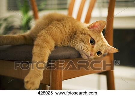 Katz Liegen Auf A Stuhl Stock Fotografie 428025 Fotosearch