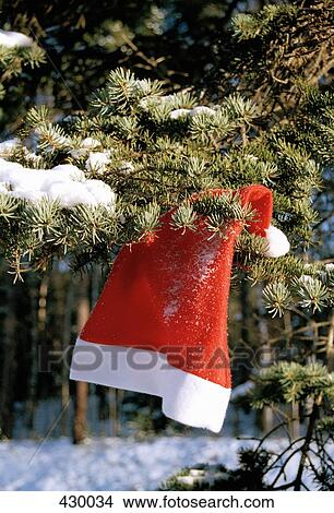 santa hat hanging in an evergreen tree - An Evergreen Christmas