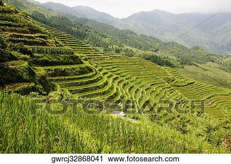 Vista De ángulo Alta De Terraplenar Arrozales Jinkeng Campo Terrazas Provincia De Guangxi China Colección De Imágen