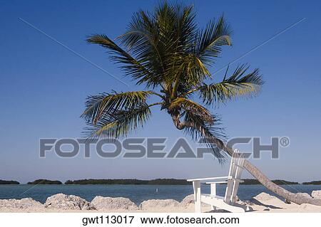 Empty Adirondack Chairs And A Palm Tree