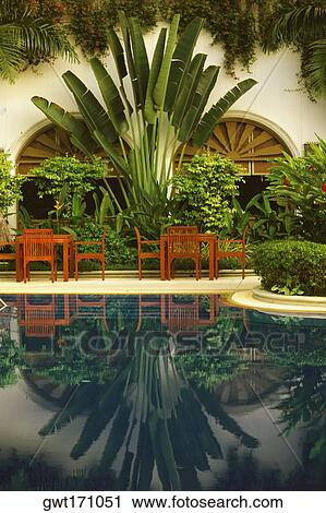 Reflection Of Plants In A Swimming Pool Chiang Mai Thailand