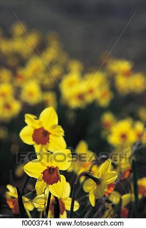 Banques De Photographies Fleur Flore Vie Sauvage Jaune Champ