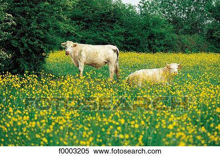 landschaftsbilder mit tieren - malvorlagen gratis