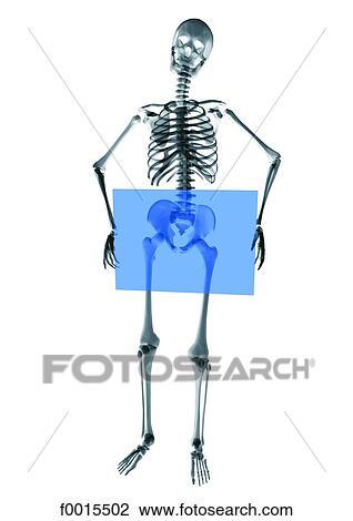 Colección de foto - esqueleto, :, desnudo f0015502 - Buscar fotos e ...