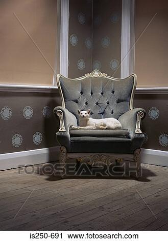 vente chaude en ligne af77a 52e5b Bourré, chat, dans, une, fauteuil Banque d'Image