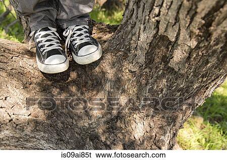 Banque d Image - jambes, et, pieds, de, jeune homme, debout, sur, arbre 2565382d186