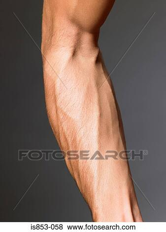 Pictures of Veins on a mans arm is853-058 - Search Stock Photos ...