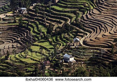 Terrace Cultivo Campo Terrazas En Nagarkot Nepal Asia Colección De Fotografía