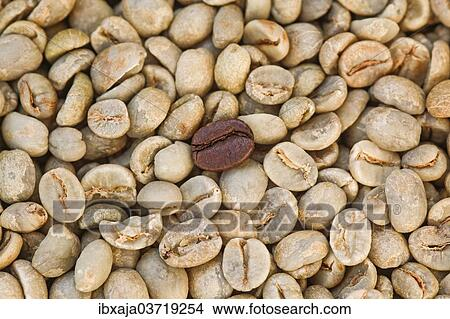 Unroasted Coffee Beans >> Unroasted Coffee Beans And One Roasted Coffee Bean Germany Europe Picture