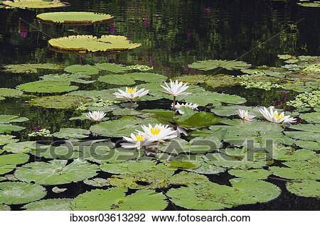 بركة ماء from fscomps.fotosearch.com
