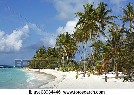 Beach With Palm Trees On The Indian Ocean White Sand And