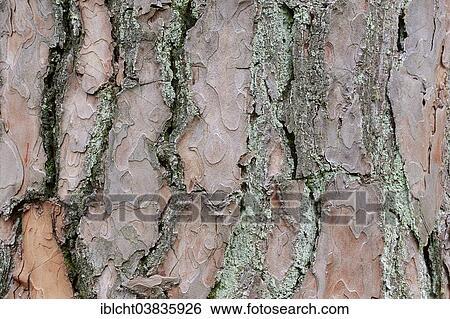 grand Pinus adolescent lesbienne sexe dans lit