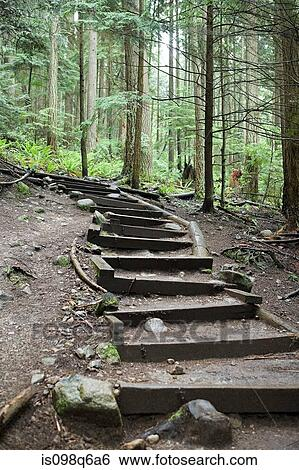 stock images of steps in forest is098q6a6 search stock photography