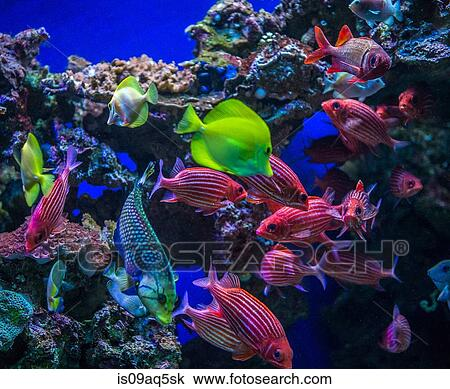 Underwater View Of Colorful Tropical Fish Maui Hawaii