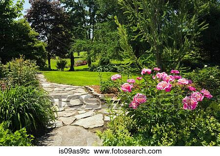 Stock photography of flagstone path and pink peony flowers paeonia flagstone path and pink peony flowers paeonia garden border in spring season mightylinksfo