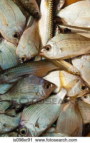 Stock photography of fish for sale at morning fish market for Mural fish in tamil