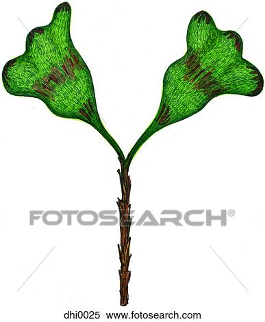 Stock Illustration of The letter Y resembling a plant with leaves