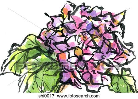 stock illustration of a purple hydrangea shi0017 search eps rh fotosearch com hydrangea clip art border free hydrangea clipart png