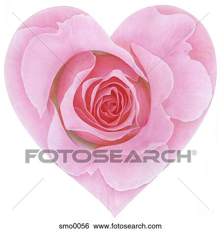 Cuore Ha Modellato Rosa Colore Rosa Contro Sfondo Bianco Archivio