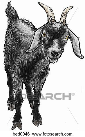 Goat Stock Illustration Bed0046 Fotosearch