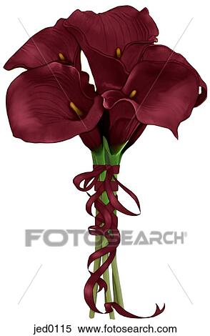 A Burgundy Bouquet Of Calla Lilies Stock Illustration